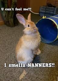 Funny Rabbit Memes - lovely 24 funny rabbit memes wallpaper site wallpaper site