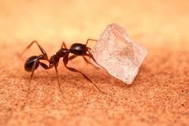 Very Small Ants In Bathroom When It U0027s Wet Ouside The Ants Come Marching In Abc10 Com