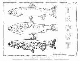 coloring freshwater fish coloring pages rainbow trout pic