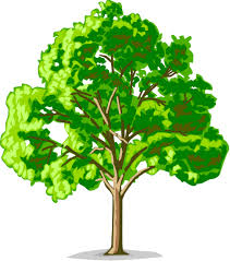 tree program pine swcd