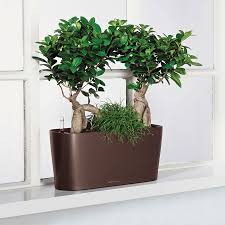 Window Sill Planter by Lechuza White All In One Delta Self Watering Windowsill Planter