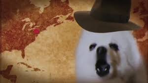 american eskimo dog meme indiana borks coub gifs with sound