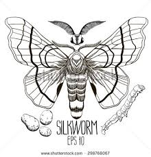 graphic silkwormbutterfly caterpillar cocoon vector illustration