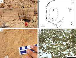 first record of bird tracks in the late cretaceous cenomanian of