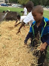 Mulching Vegetable Garden by Mulching Your Schoolyard Garden
