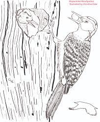 wildlife coloring book caribbean birds coloring book