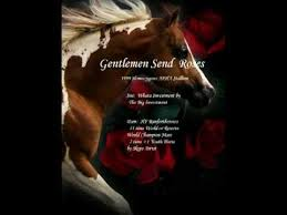 send roses gentlemen send roses 1999 homozygous apha stallion world