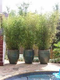 Bamboo Backyard 22 Simply Beautiful Low Budget Privacy Screens For Your Backyard