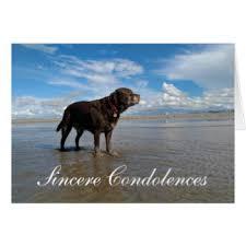 dog condolences dog condolence greeting cards zazzle co uk