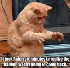 Funniest Cat Memes - 20 cat memes that are simply unforgettable funny cat memes