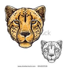 cheetah colored head suitable tattoo team stock vector 662137210