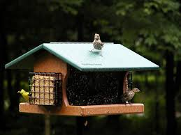 cool backyard bird feeders like small house with rooftop ideas