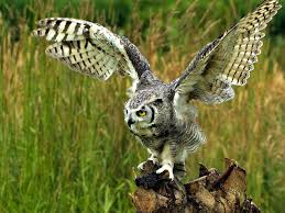 white owl 2 wallpapers august 21 2017 page 10 wings owl images bird wallpaper leo lion