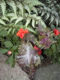 volunteer vegetables edible shade plants edible ornamentals z 5