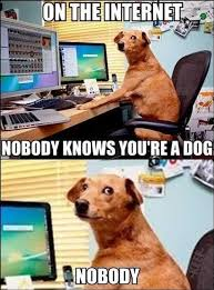 Funny Internet Memes 2016 - on the internet nobody knows you re a dog nobody what breed