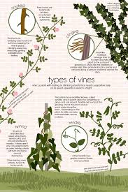 types of vines u2014 feed the data monster