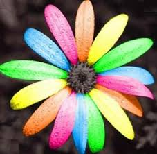 colorful colors colors images colorful daisy wallpaper and background photos