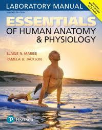 Human Anatomy And Physiology Marieb Hoehn Anatomy U0026 Physiology Edition 4 By Elaine N Marieb
