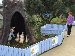rabbit garden more of the story picture of the rabbit garden cambridge