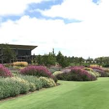native plant nursery terrey hills great surprise to see our newly finished garden in the barossa