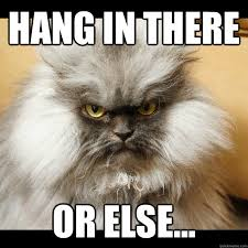 Colonel Meow Memes - hang in there or else colonel meow tells it quickmeme