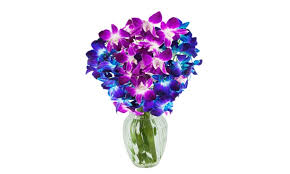 blue dendrobium orchids kabloom bouquet of 5 blue dendrobium orchids 5 purple from