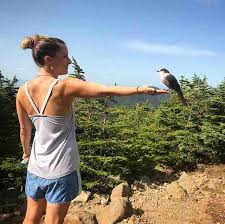 bird flies appalachian trail hiker disney