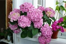 hydrangea arrangements 25 hydrangea flower arrangements for interior decorating and home