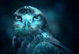 wallpaper biru hijau gambar sayap hijau paruh burung rajawali biru burung hantu