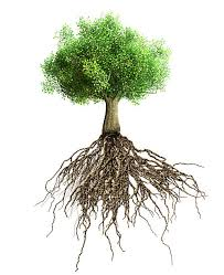 tree roots pictures images and stock photos istock