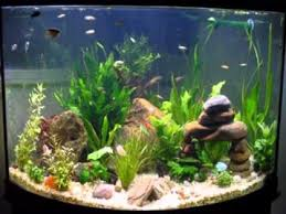 diy fish tank decorations ideas