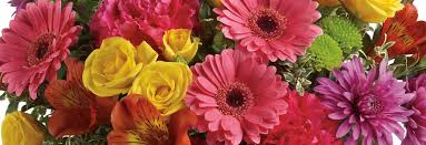 Flower Shops In Downers Grove Il - illinois florist awarded retailer of the year phillip u0027s flowers