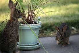 rabbits wild love photography