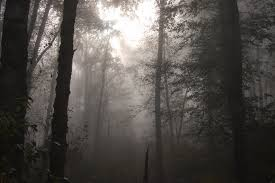 wallpaper tumblr forest foggy forest background tumblr background check all