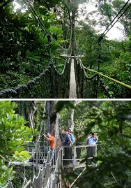 Under Canopy Rainforest by 11 Treetop Walks Designed For Nature Lovers Contemporist