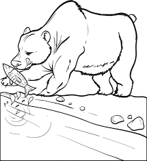 free printable bear catching fish coloring kids