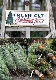 fresh cut trees pictures photos and images for