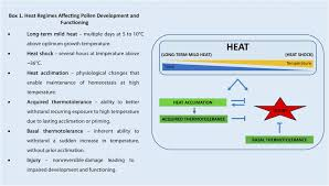 high heat plants pollen development at high temperature from acclimation to