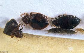 The Inn At Christmas Place Bed Bugs New York U0027s Five Star Hotels U0027infested U0027 With Bed Bugs After Major