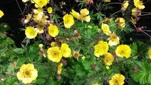 Rock Garden Perennials by Hello Dear Flower Friends Riverview Tree U0026 Landscaping Inc