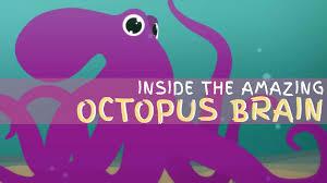 why the octopus brain is so extraordinary cláudio l guerra