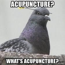 Acupuncture Meme - pigeon blowdart meme generator