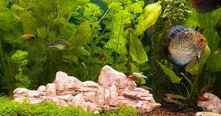 aquarium design exle how to set up a planted aquarium