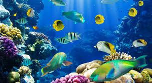fish hd wallpaper find best latest fish hd wallpaper in hd for