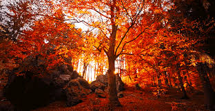 autumn beautiful colors fall forest animated gif 3573843