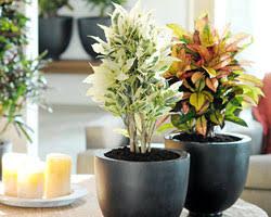 plantes pour bureau 7 plantes vertes pour votre bureau gamm vert