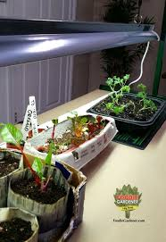 grow lights for indoor herb garden grow lights for beginners start plants indoors the foodie gardener
