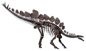 How Many Feet Is 150 Meters Stegosaurus Wikipedia