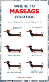 The Health Barn Best 25 Dog Ideas On Pinterest Dog Stuff Puppy Care And Puppy