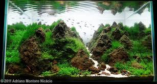 planted tank himalaia dreams by adriano montoro aquarium design